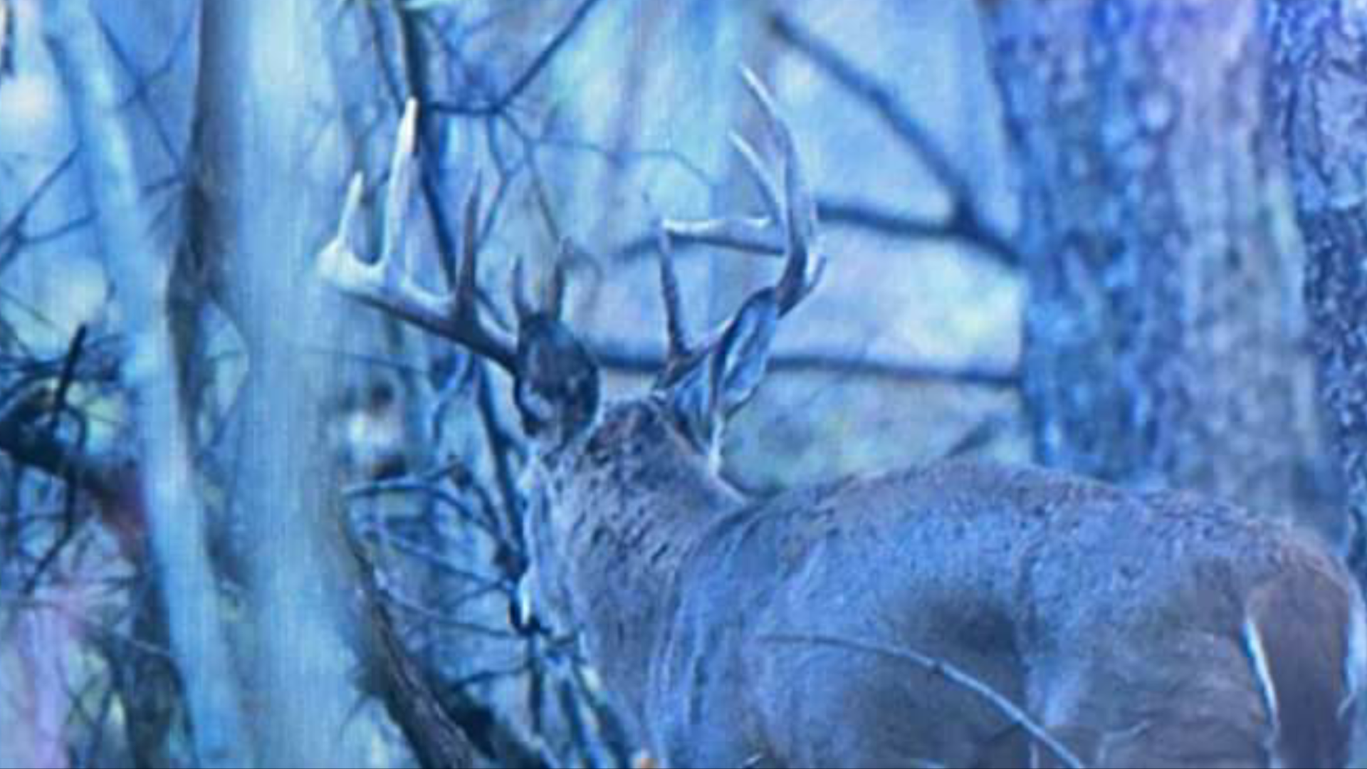 Monster Whitetail Outfitters  photo gallery
