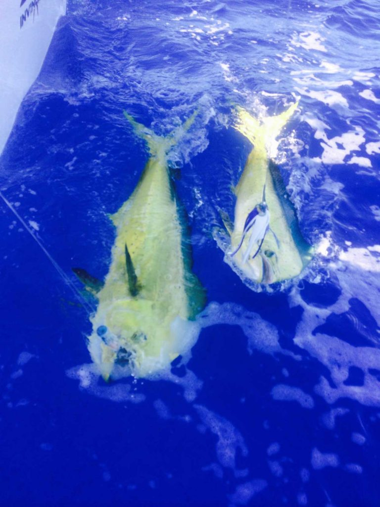 Far Out Fishing Charters photo gallery