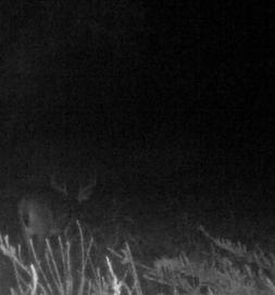 Kentucky Hunting Forum photo gallery