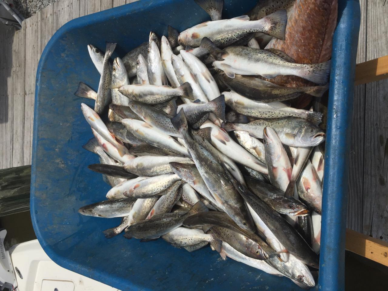 Cajun Fishing and Hunting Charters photo gallery