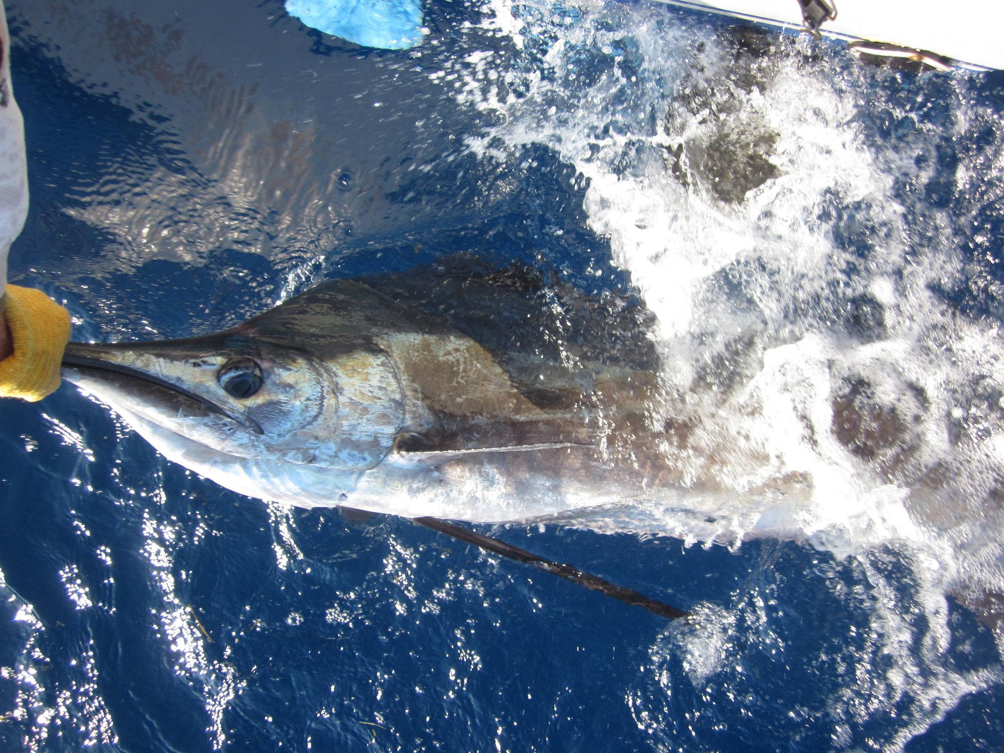 Tuna Wahoo ! Charters photo gallery