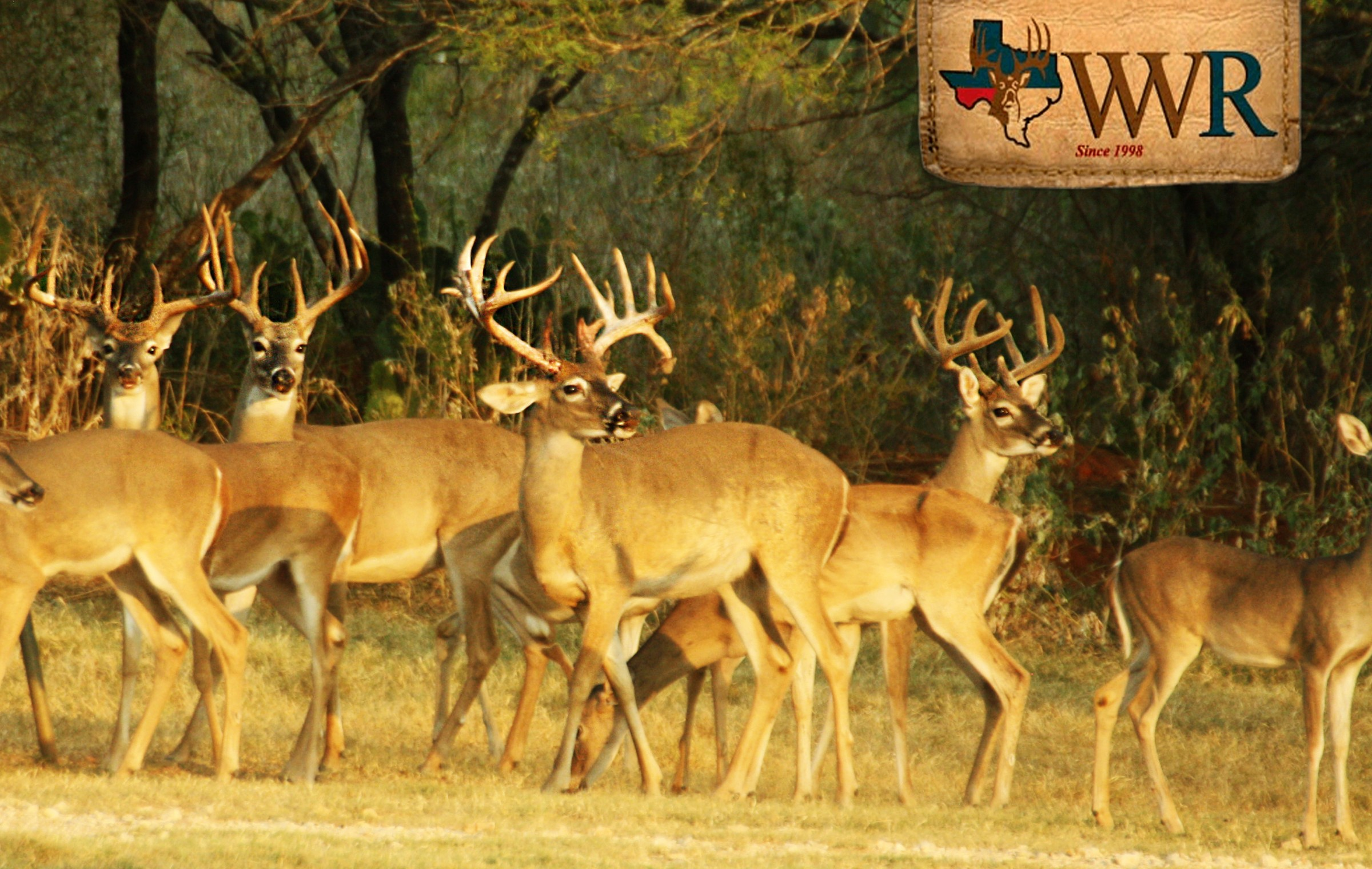 Wilson Whitetail and Wingshooting Ranch  photo gallery