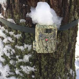 Trail Cameras and the Postseason