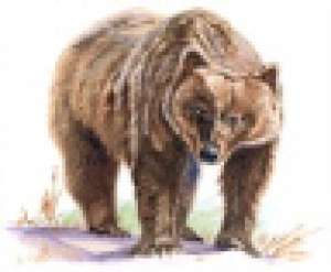 Brown/Grizzly Bear