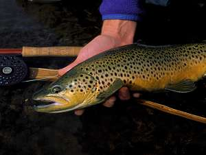 JD High Country Outfitters Fishing photo gallery