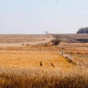 Mill's Pheasant Hunt