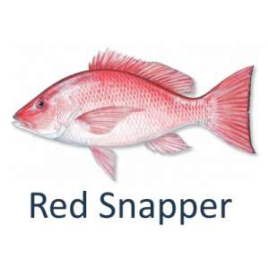 Red Snapper Fishing with the Galveston Guides