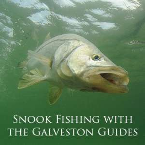 Snook Fishing with the Galveston Guides