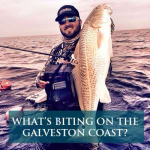 What's Biting on the Galveston Coast? Image