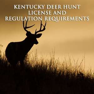 Kentucky Deer Hunt License and Regulation Requirements Image
