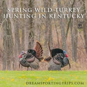 Spring Wild Turkey Hunting in Kentucky