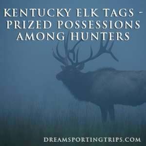 Kentucky Elk Tags - Prized Possessions Among Hunters