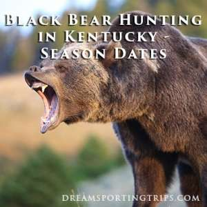 Black Bear Hunting in Kentucky - Season Dates