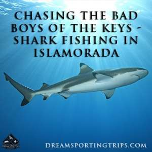 Chasing the Bad Boys of the Keys - Shark Fishing in Islamorada Image