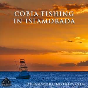 Cobia Fishing in Islamorada Image