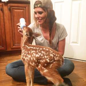Oh deer, I found a baby animal. What should I do? Image