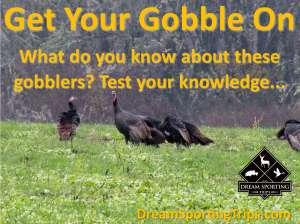 Wild Turkey Trivia