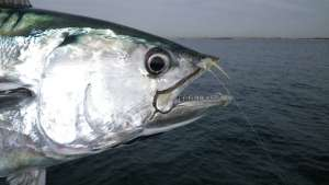 Galveston - where the fish are biting! Image